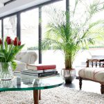 Alla scoperta delle piante da appartamento