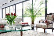 le piante per la casa