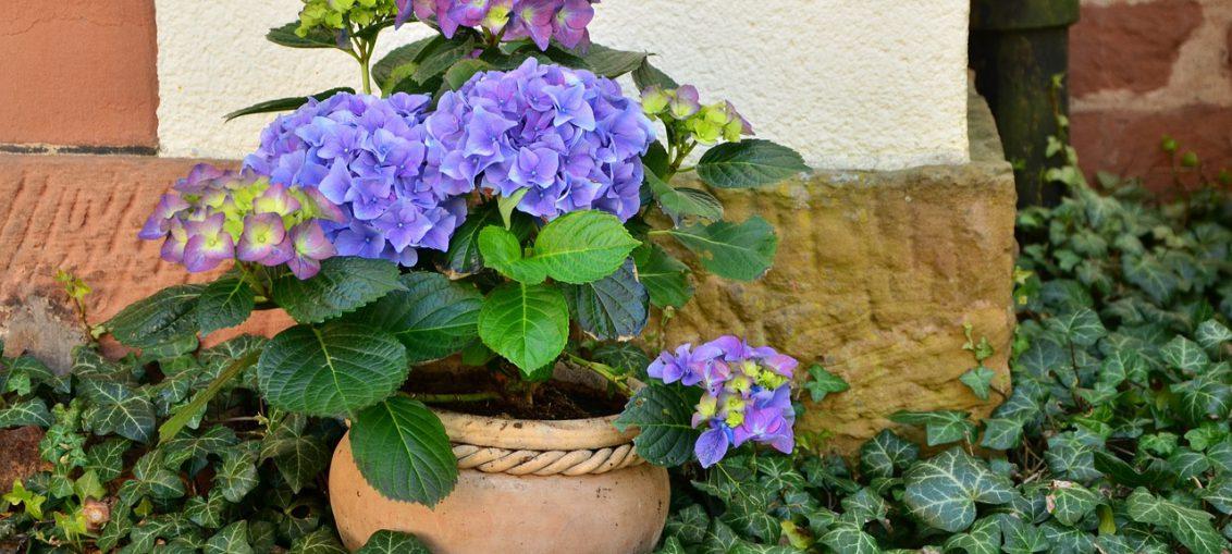 Composizione elegante con piante e fiori