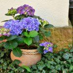 Design d'interni con piante e fiori