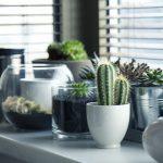Consigli passo passo per le vostre piante