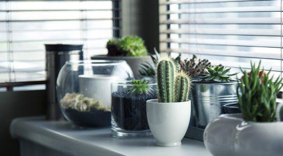 suggerimenti per piante per casa
