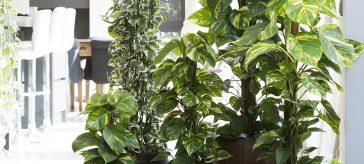le piante sempreverdi per il tuo appartamento