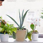 Come curare la malattia delle piante