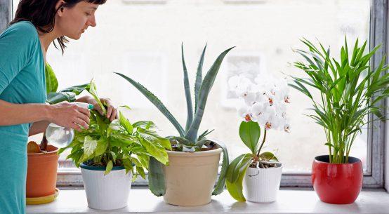 cura delle malattie delle piante