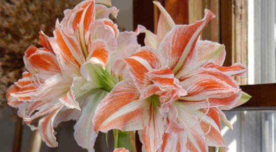piante da fiori per casa