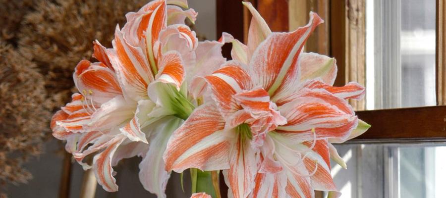 Pante da fiori per casa