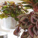 Piante dalle foglie variegate