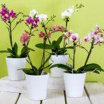 Le orchidee e le piante esotiche