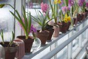 curare le piante da davanzale