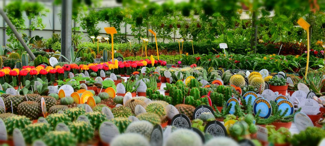 Dove poter acquistare le piante per la casa for Piante da comprare