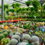 Dove acquistare le piante da appartamento