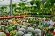 acquistare in vivaio piante e fiori