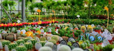 Acquisto bouquet e mazzi di fiori online for Acquisto piante e fiori on line