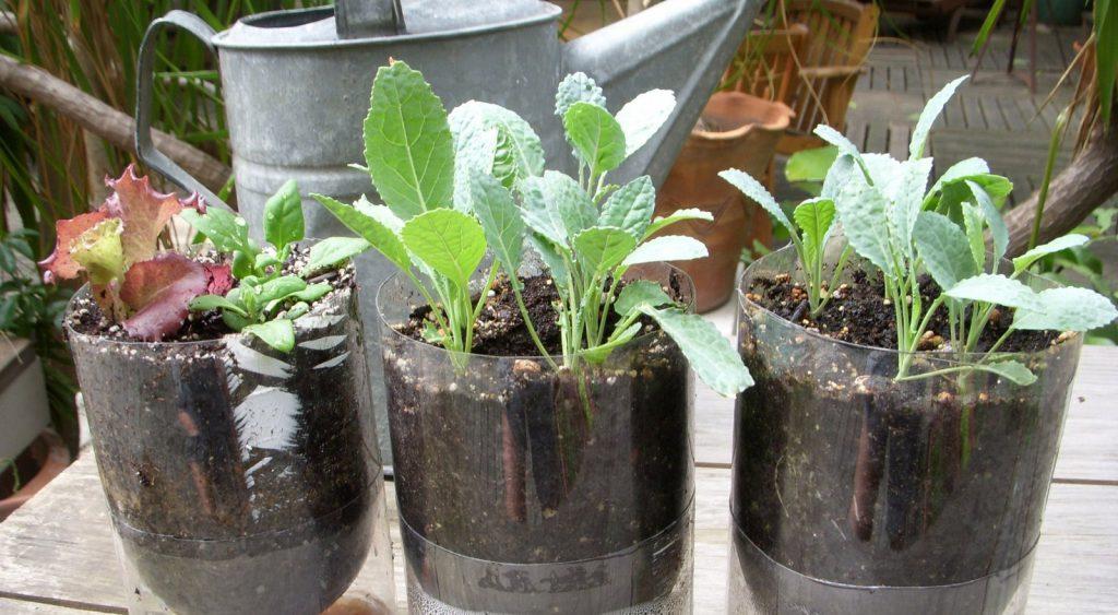 piante idroponiche vasi di piante du appartamento