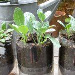 Idrocoltura. Metodo di coltivazione delle piante senza terra