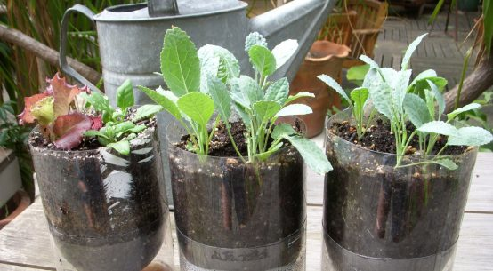 sistema di coltivazione idroponico