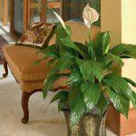 Valorizza la tua casa con le piante