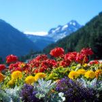 Il bouquet e mazzo di fiori perfetto per un onomastico