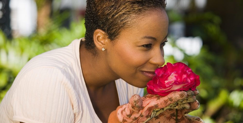 La potatura delle rose come e quando potare le rose di casa for Potare le rose
