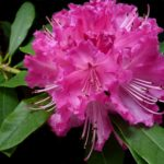 5 piante che fioriscono in inverno