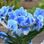 Orchidea, un fiore elegante per ogni occasione: come curarla e mantenerla sana in casa