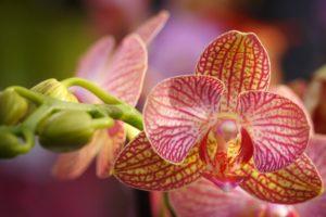 Orchidea Come Curarla | Cura e Mantenimento