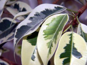 5 piante sempreverdi da interno