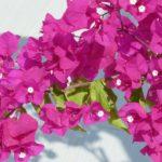 Le piante rampicanti da interno e appartamento: come sceglierle