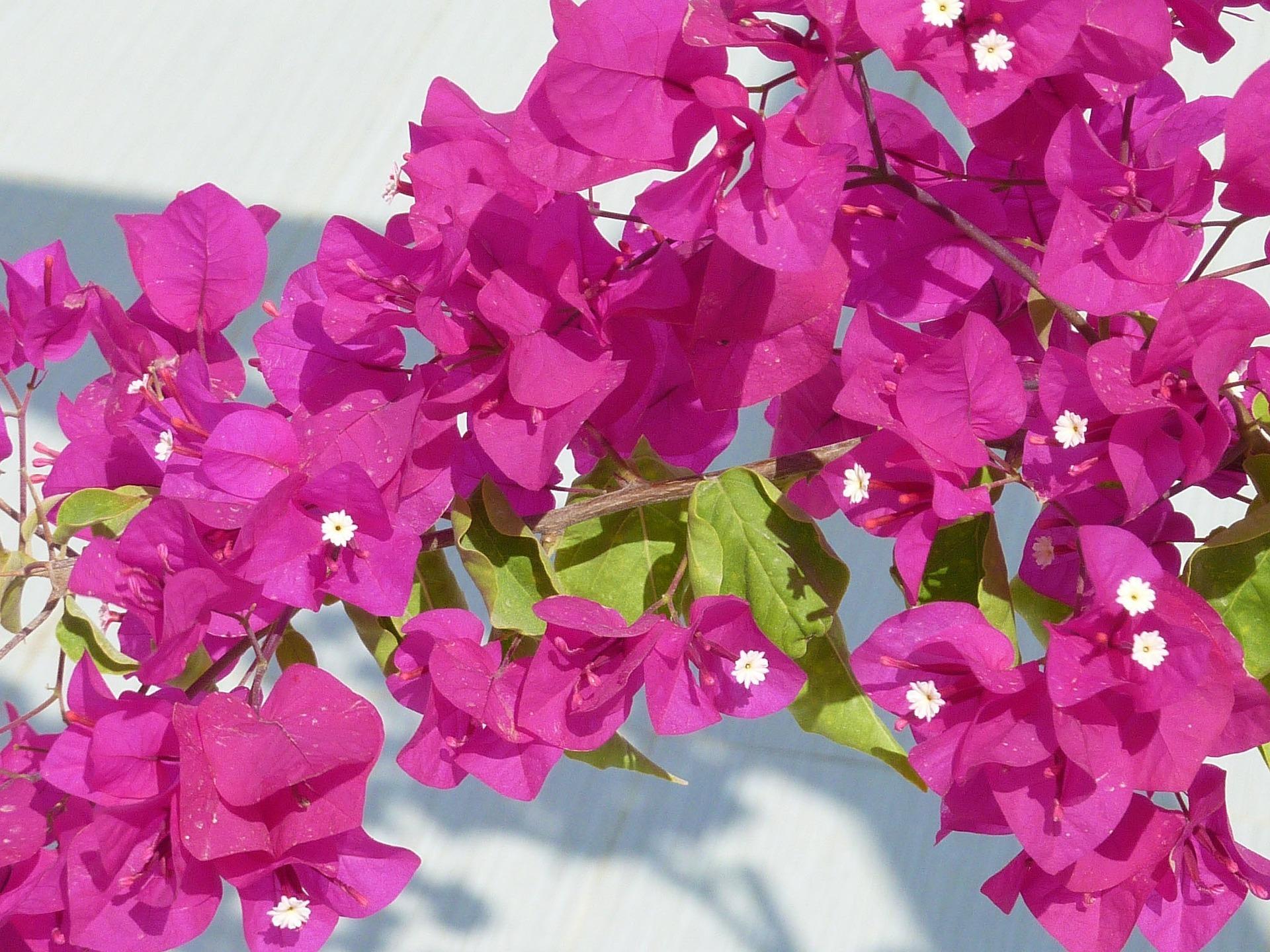 Piante Rampicanti Da Interno le piante rampicanti da interno e appartamento