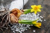 Come e quando piantare i bulbi da fiore