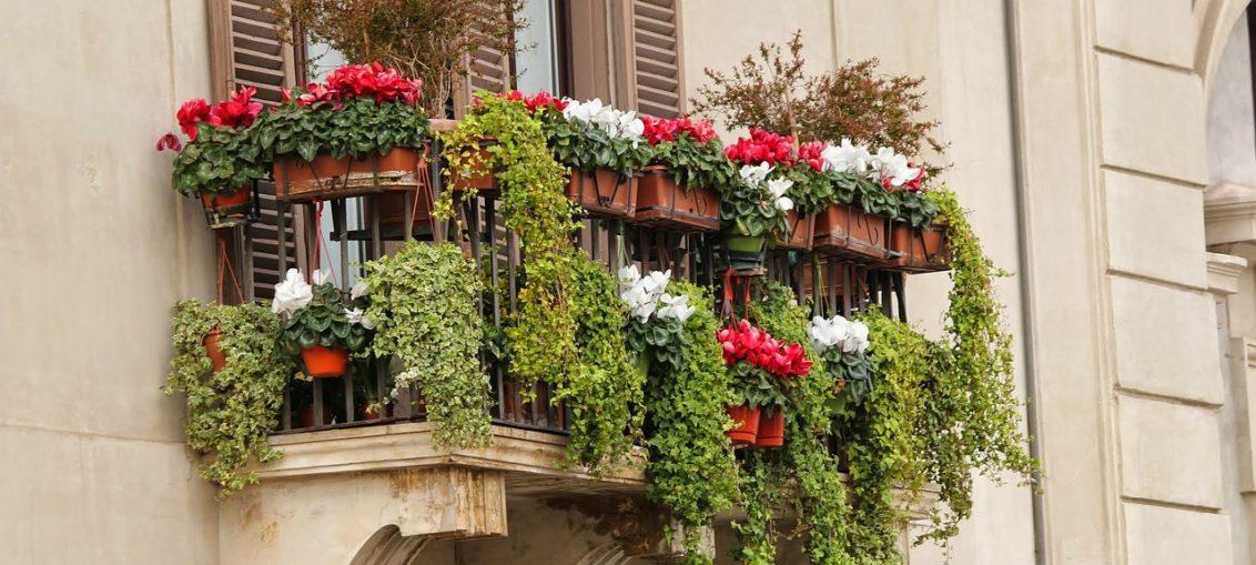 Piante da balcone - FioriOnline