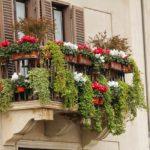Piante da balcone: rampicanti, con fiori e sempreverdi