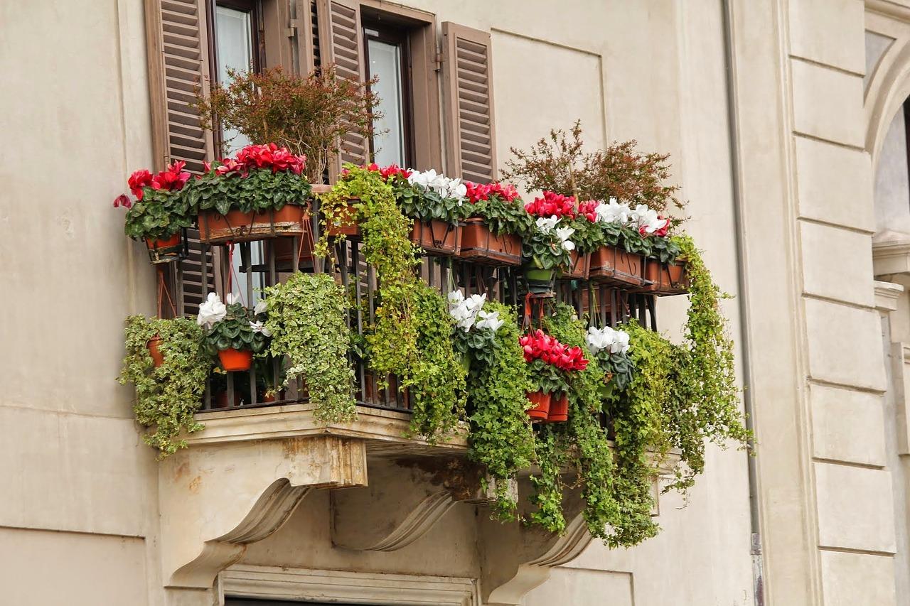 Fiori Da Balcone Ombra piante da balcone: rampicanti, con fiori e sempreverdi
