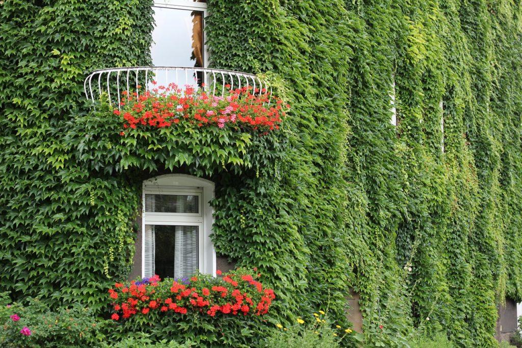 Piante da balcone con fiori - FioriOnline