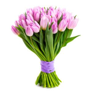 Tulipani rosa delicati
