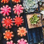 Come curare le piante grasse: consigli e suggerimenti