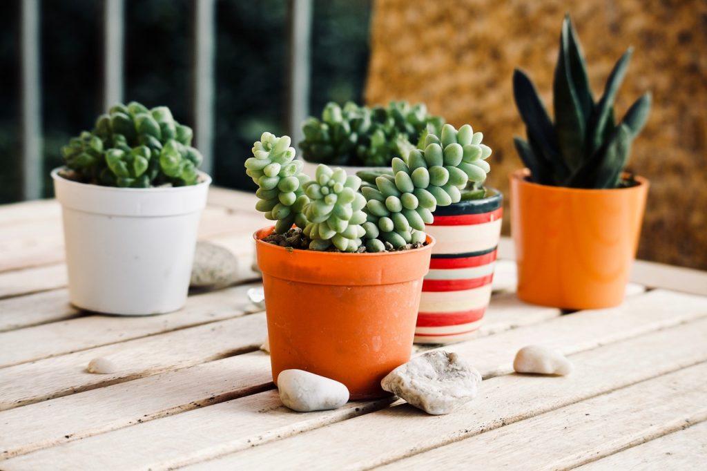 Vasi con Piante Grasse - Come curare le piante grasse - FioriOnline