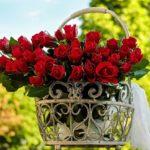 Bouquet di fiori rossi: i più belli e le occasioni nelle quali regalarli