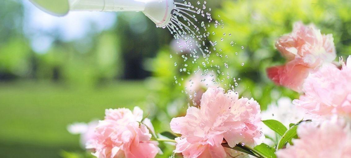 Annaffiare fiori in vacanza