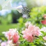 Annaffiare fiori e piante durante le vacanze: cosa fare e consigli utili
