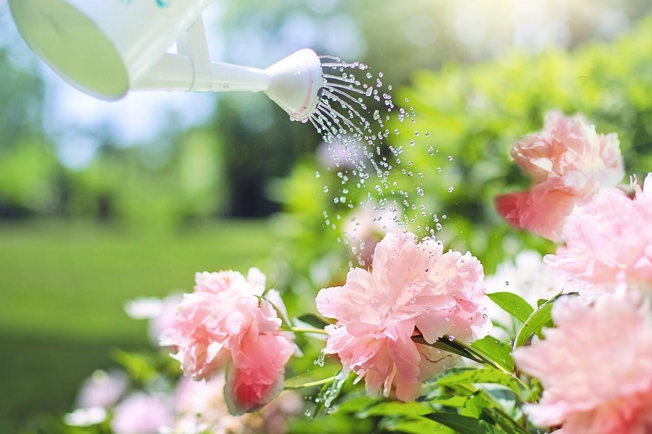 Bagnare Piante Con Bottiglie annaffiare fiori e piante durante le vacanze: cosa fare e