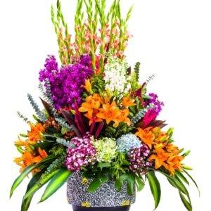 Mazzi di gladioli colorati