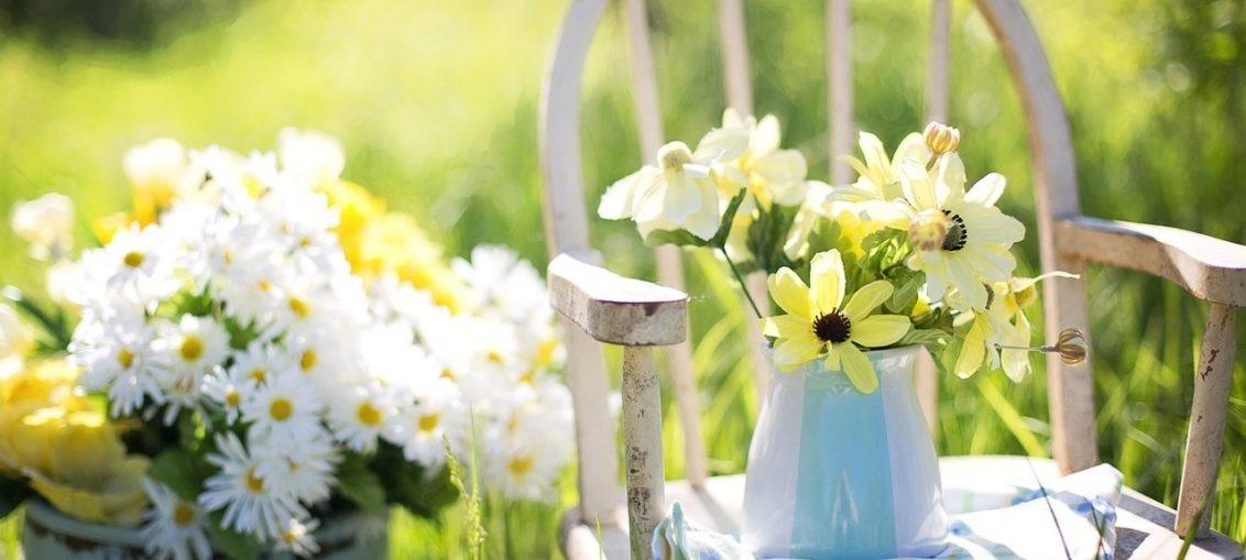Fiori facili da coltivare in estate