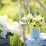 5 fiori facili da coltivare in estate