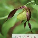 Quali sono i fiori più rari al mondo? Le 5 specie più rare e particolari