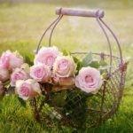 Mazzi di Fiori Rosa, i più belli e quando regalarli