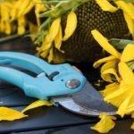 La potatura estiva delle piante: come e quali piante potare in estate
