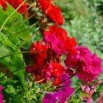 Le piante da balcone per l'autunno