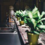 I Benefici delle Piante in Casa